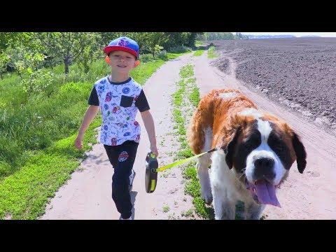 Прогулка с нашей собакой породы Сенбернар, Гайкой.