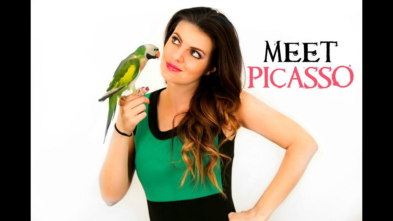 PARROT TALK #5 Meet my Mustache Parakeet