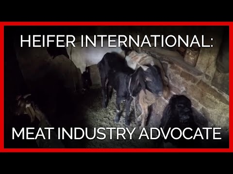 Heifer International: An Advocate of the Meat Industry
