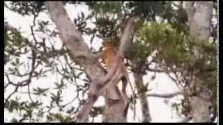 Proboscis Monkey - The Mascot of Visit Malaysia Year 2014