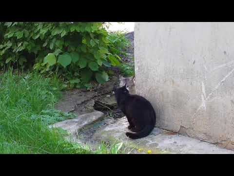 20140519 094013 Two cats hissing at each-other