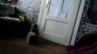 Płaczek 2 niesamowity pies ktory potrafi plakac jak dziecko