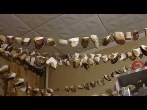 Как сушить грибы дома, #ГалкинTV