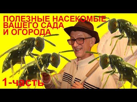 Полезные Насекомые на Даче: Энтомофаги Сада и Огорода? Как Найти  Насекомых Энтомофагов? ЧАСТЬ-1.