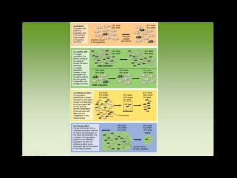 APES Chapter 5: Evolution of Biodiversity