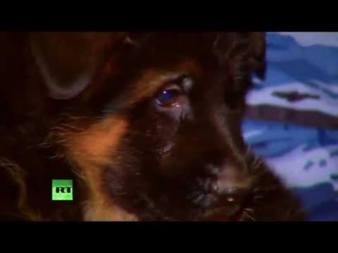Moscou offre à Paris un adorable chiot pour remplacer Diesel, mort dans le raid de Saint-Denis