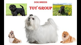 Dog Toy Breeds 2021: The Cutest of them all.