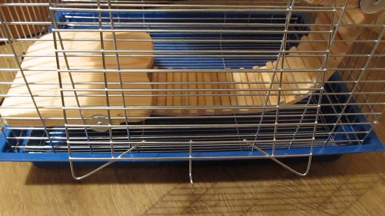 Витрина для шиншиллы / cage for chinchillas. Hare · bunny · купить витрины для шиншилл, клетки для шиншилл, киев, киевская область это не авито.