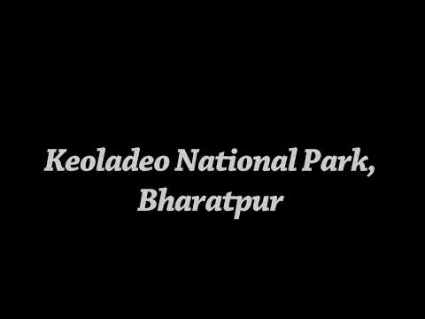 India's birding paradise - Keoladeo National Park, Bharatpur