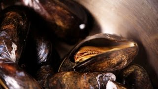 How to Steam Mussels | Fish Filleting