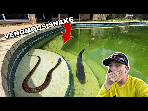 Deadly Snake Ate These Fish!!