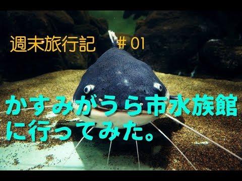 かすみがうら市水族館に行ってみた