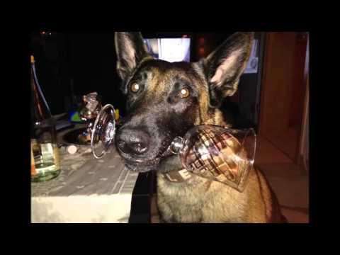 Diashow fips-dog.de Impressionen 2014