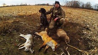 Охота с дратхааром по 2 зайцам и лисе