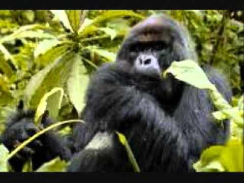 In Memory of Dian Fossey