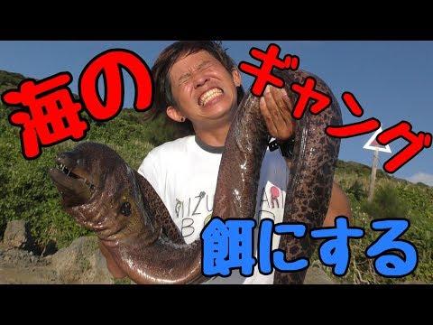 巨大ウツボを餌にしたらなにが釣れた?【水溜りボンドコラボ】