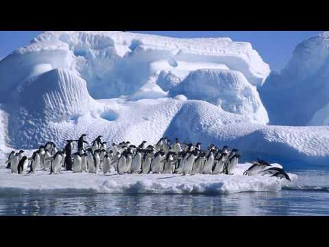 Антарктида ( факты для детей)