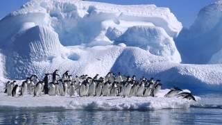 Антарктида ( факты для детей)(, 2015-03-17T18:42:25.000Z)