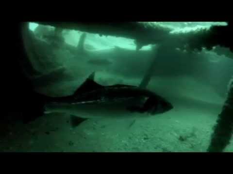 Spearfishing - Le Buan Vivien - FRANCE - Souvenirs émeraudes HD