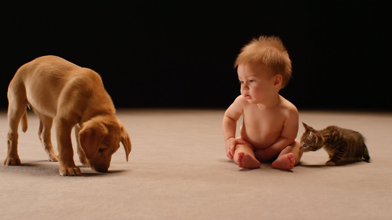 Secret Life of Babies why we find babies kittens and puppies so