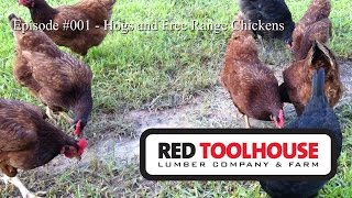 Episode 001 - Farm Updates, Pig History, Why Free Ranging Chickens Doesn