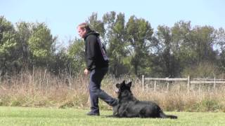 Irko Vom Walsagrund Ipo Obedience Training