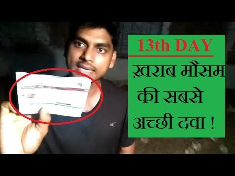 13TH DAY EVENING ! POULTRY TRAINING VIDEO BY ABHISHEK SINGH