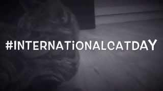 #InternationalCatDay