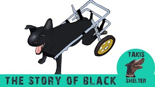 A tribute to Black. A dog's story from drowning in the sea to becoming a symbol - Takis Shelter