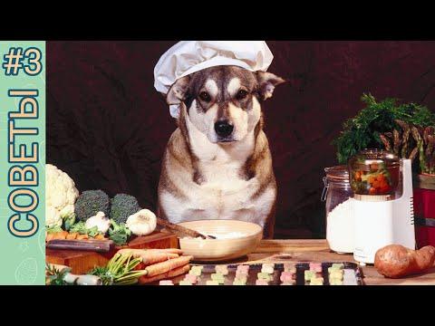 Вопрос: Зачем в рацион собаки нужно обязательно включать кисломолочные продукты?