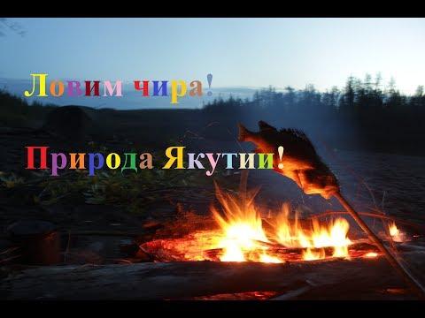 Ловим чира! Тонкости посола! Природа Якутии! - Cмотреть видео онлайн с youtube, скачать бесплатно с ютуба