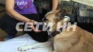 Мулинские врачи спасают собаку пострадавшую от надругательства со стороны человека thumbnail