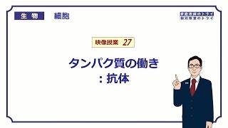【高校生物】 細胞27 抗体(15分)