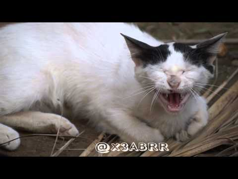 angry cat غضب قطة قط