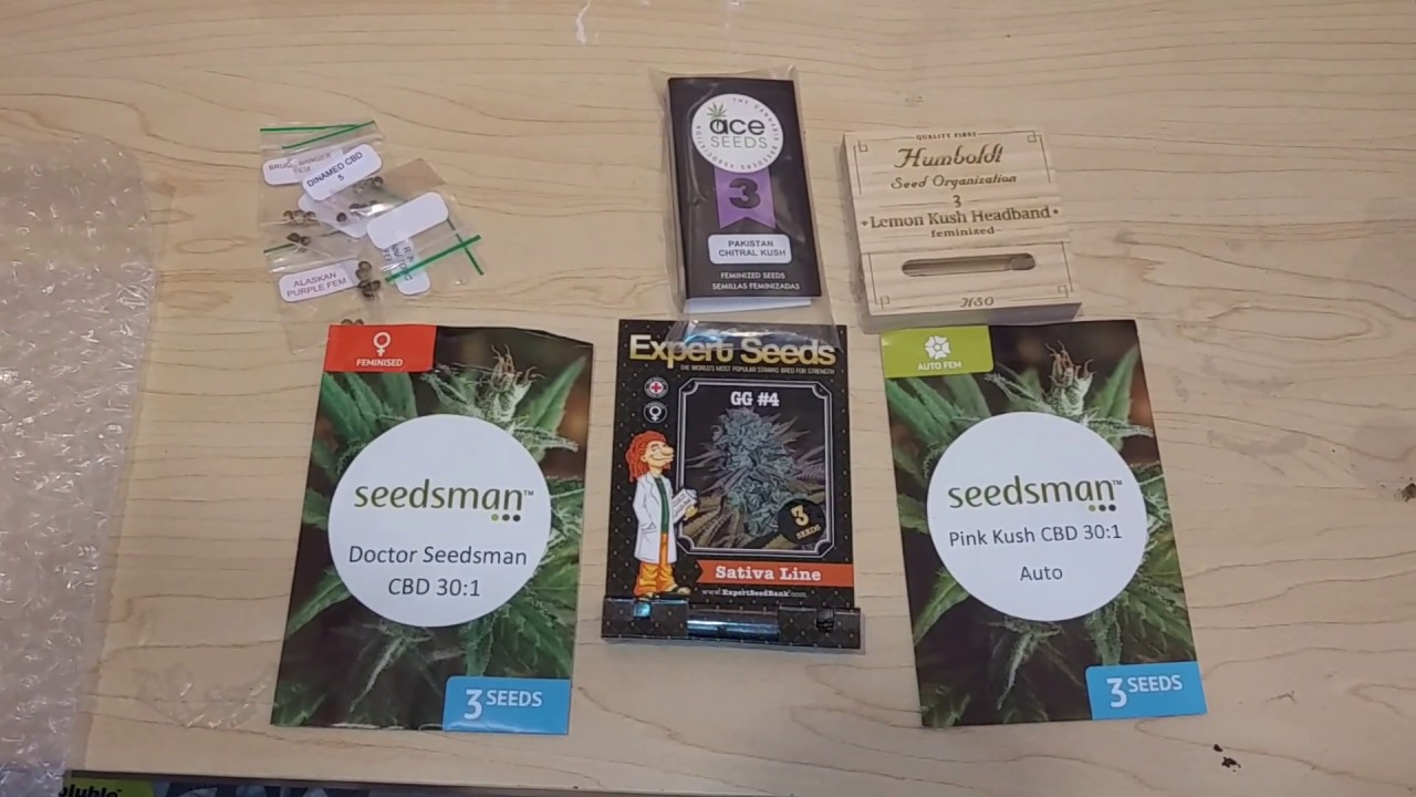 Cannabis seeds from #seedsman seeds,#cbd, Humboldt,gorrila glue #4 and much  more
