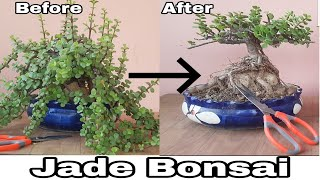 Bonsai Jadebonsai How To Make Jade Plant Bonsai Jade Bonsai How To Make Jade Bonsai Youtube