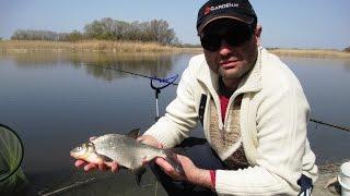 Фидер на реке Псел / Рыбалка апрель 2016