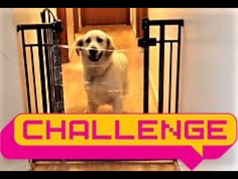 funny-puppy-dogs-reaction-to-invisible-challenge!