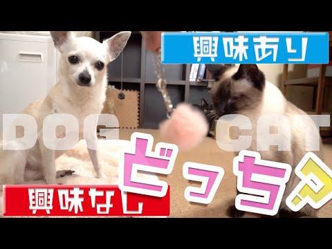 【犬猫編】興味あり興味なしは、どっち?