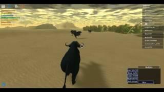 Massive buffalo herd: Roblox Wild Savannah