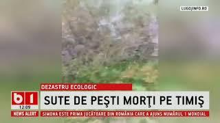 STIRI B1TV DEZASTRU ECOLOGIC, SUTE DE PESTI MORTI PE TIMIS