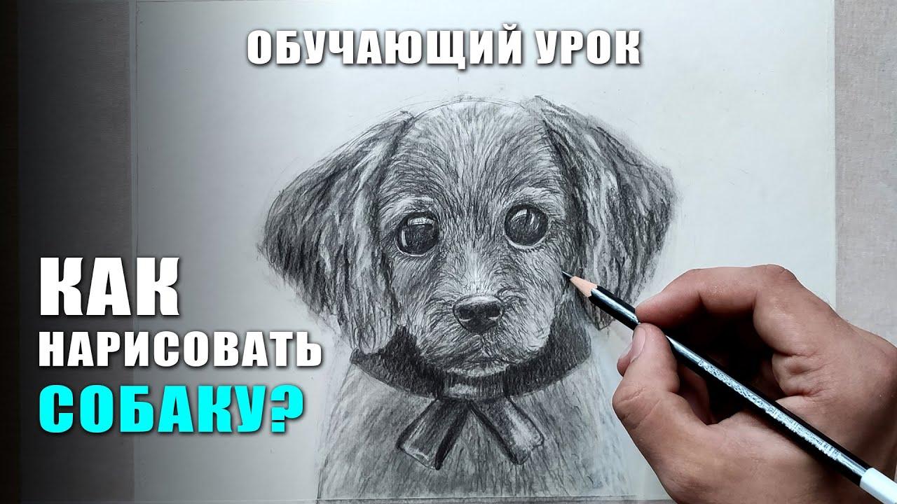 Как нарисовать СОБАКУ поэтапно карандашом. Обучающий урок по рисованию для начинающих
