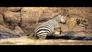 Африка!!Самые шокирующие нападения животных
