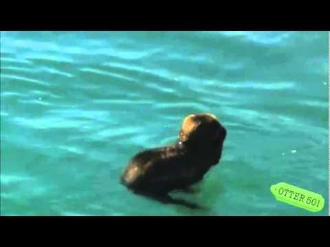 В мире животных с Николаем Дроздовым (все выпуски