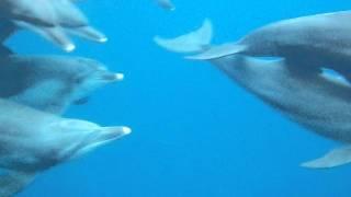 イルカの棲む御蔵島でシュノーケリングしてきました。 行ってみたら、思...