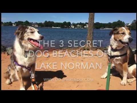The 3 Secret Dog Beaches of Lake Norman