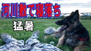 grandchild and German Shepherd dog 虹の国へ渡ったシベリアンハスキー...