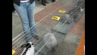 Выставка кроликов в Харькове 22 апреля 2012.avi(, 2012-04-23T20:05:08.000Z)