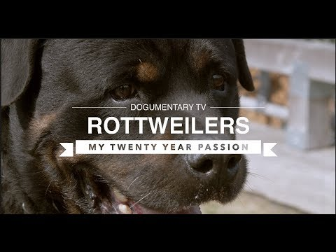 ROTTWEILERS: MY TWENTY YEAR PASSION