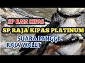 Sp Raja Kipas Platinum Suara Panggil Walet  Mp3 - Mp4 Download